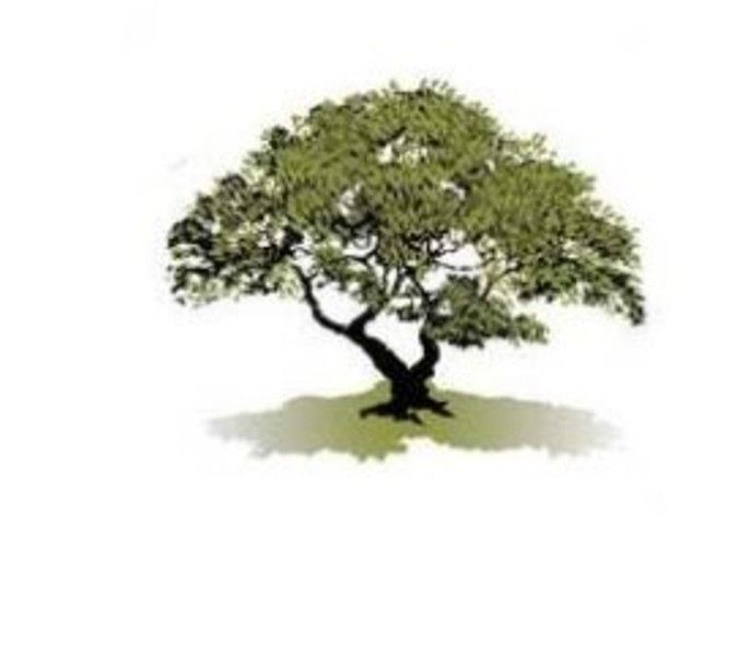 41 Best Tree Logo Images On Pinterest