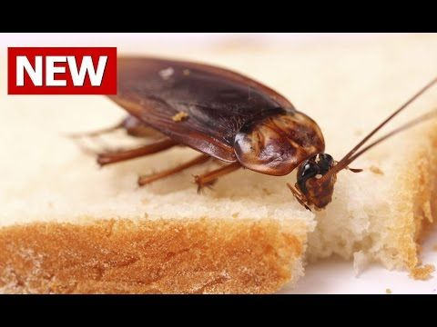 Top 5 Actually Proven Ways to Get Rid of Cockroaches Properly Today (You Really Need to Know) - YouTube