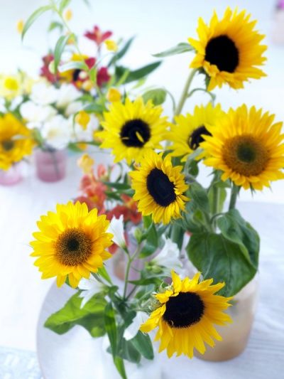 Zonnebloem is de koningin van de zomerbloemen - Augustus 2014