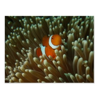 Poster featuring a cute clownfish. This ocellaris clownfish (nemo) can be seen nestled in the anemone it calls home