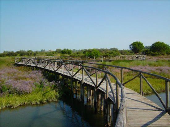Bridge in the valley