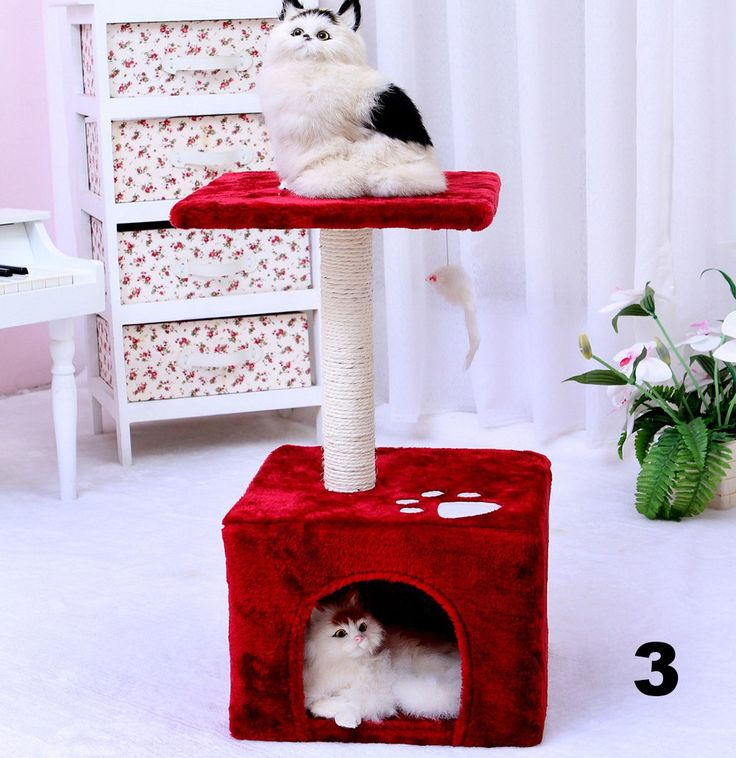 Espacios para gatos