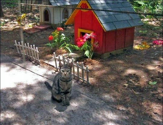 Caboodle ranch cat sanctuary in ponte vedra florida for Sanctuary ranch