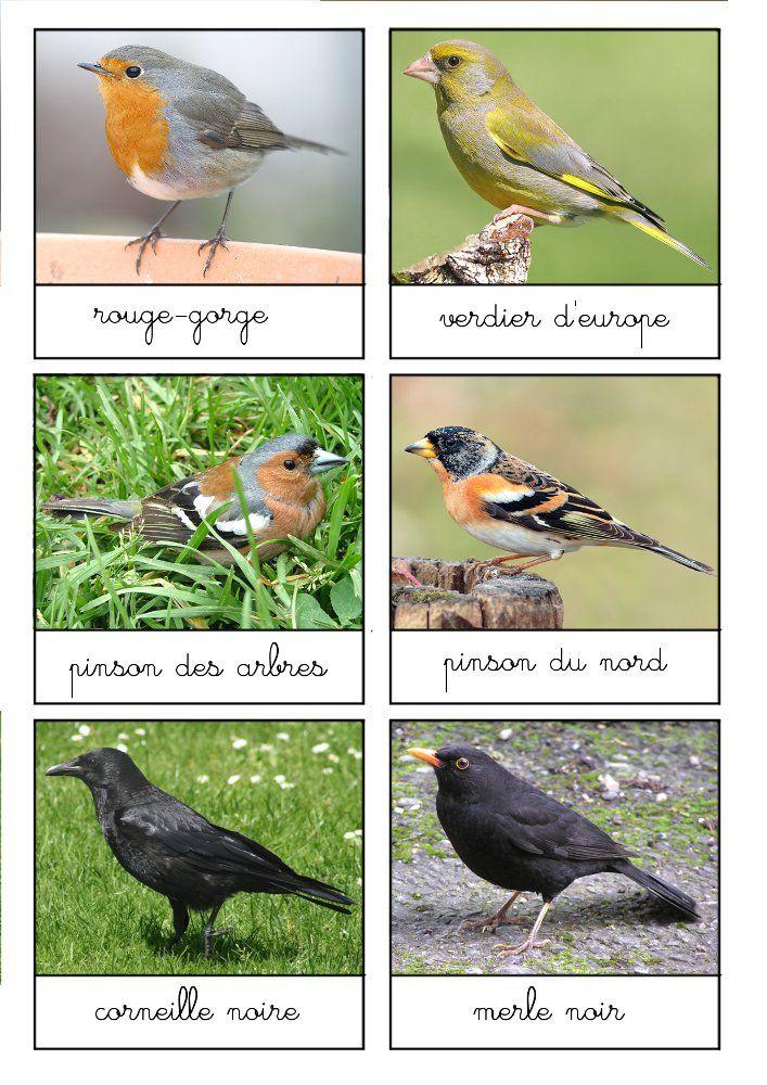 cartes-oiseaux-jardin - nombreuses autres cartes de nomenclature - superbe travail de Sans leçons ni punitions