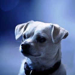 MéthodeCet exercice consiste à obtenir que le chien reste sans bouger (couché, assis ou debout) lorsque son maître s'éloigne. En général, le chien n'aime pas du tout cela car il souhaite suivre son maître en tout lieu et tout le ...