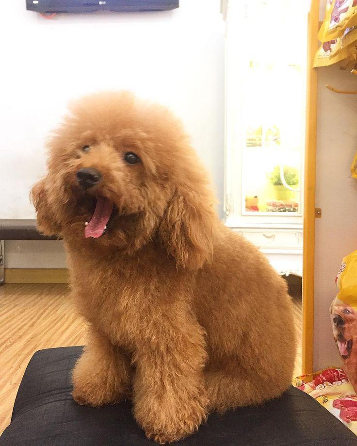 Thank you Jeany for visiting iPet Shop n Care.  Jeany tambah cantik dan wangi abis Salon.  @ipetshopncare @ipetshopncare @ipetshopncare @ipetshopncare . : Ruko Villa Citra RC - 8 Bandarlampung : 0853 111 111 33 (wa) : 10.00 - 19.00 wib : free delivery (wa) : pet taxi (wa)  #salonhewan #salonanjing #salonkucing #groomingkucing #groominganjing #ipet #pettaxi #pettaxilampung #petsagram #petshop #petshoplampung #petshoponline #petshopindonesia #lampung #bandarlampung #vetcare #vet #veterinarian…