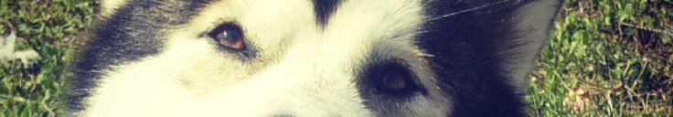 Un nuovo papà per Merry | Wolf Eyes