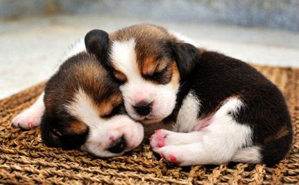 Victory! Plans for Beagle Breeding Facility Rejected