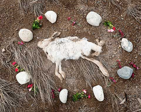 Roadkill Memorials Photographed by Emma Kisiel