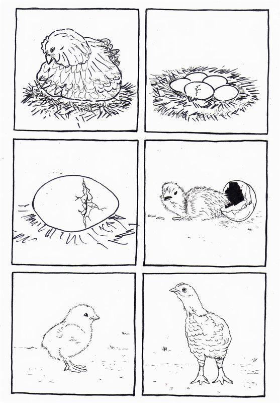 6 images séquentielles de l'oeuf à la poule - dis bonjour au soleil