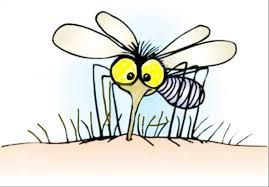 Image result for cartoon mosquito