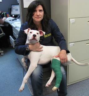 Dog Rescue Ingham