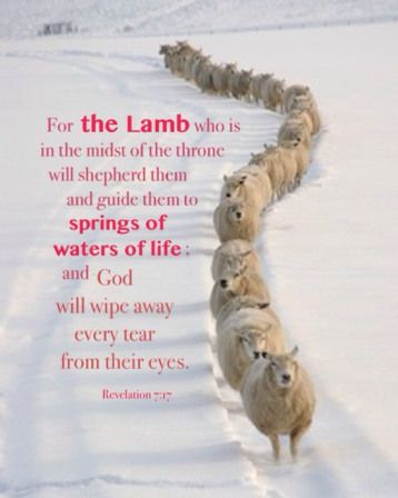 The Throne Gods Will And Lamb On Pinterest