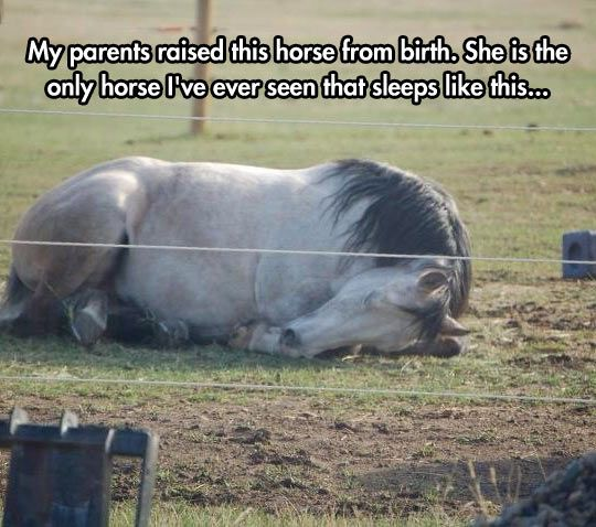 The Only Horse That Sleeps This Way - - - they only do this if they feel safe & happy