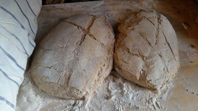 Bio bread natural East
