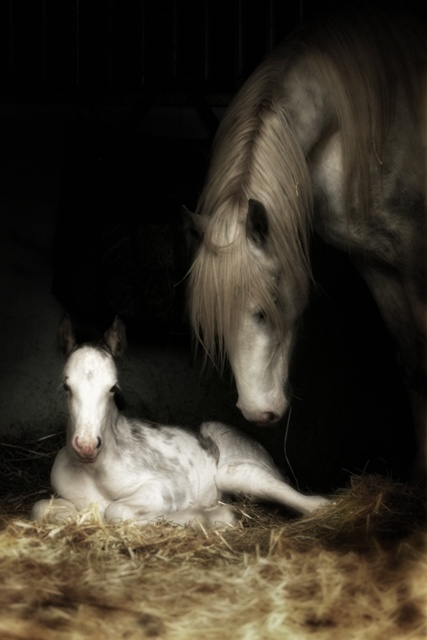 baby colt: Beautiful Horses, Animals, Mothers, Gypsy Horse, Baby, High, Foal