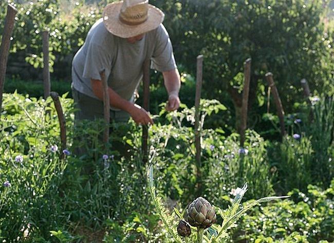 Cultiver son potager selon sa région  Il n'y a que des avantages à cultiver des légumes de saison. L'époque est à l'uniformisation des semences et plants potagers, mais nous avons intérêt à retrouver des variétés locales.