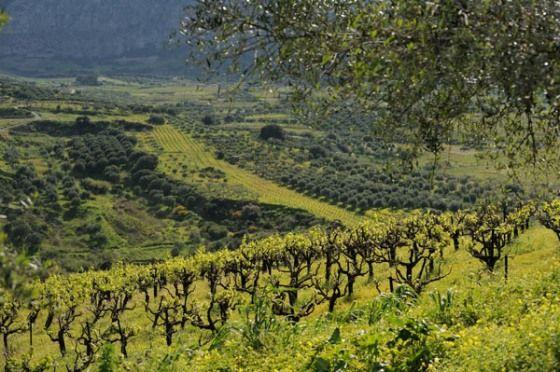 Visit Greece | Autumn in Crete #visitgreece #autumn #fall #greece