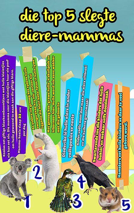 Afrikaanse taakhulp: Top 5 slegte diere-mammas. Sorg nie vir kleintjies. Koalas. Ysbere. Diederike. Swartarende. Hamsters. Hoezit. Diere. Animals