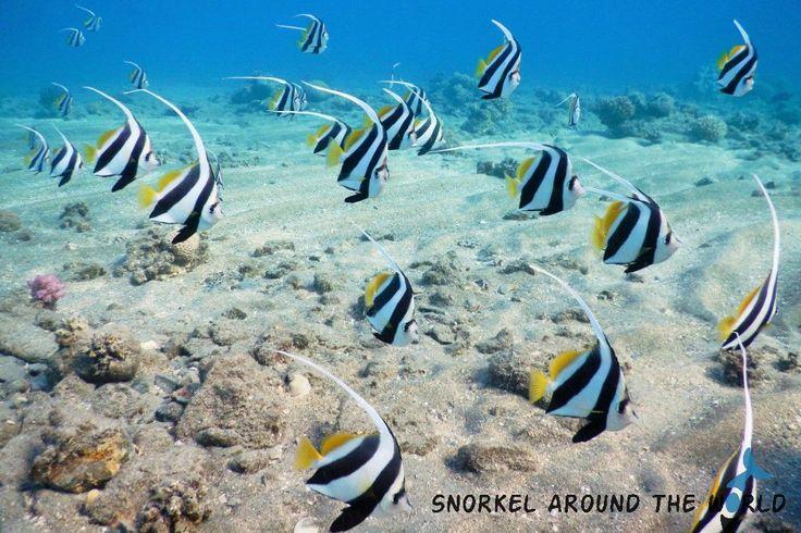 Fish in the Marsa Mubarak - Marsa Alam  Photo: snorkel.around.the.world  Marsa Alam- Egypt  Photo was taken by Anett Szaszi with a Nikon Coolpix Aw120 camera.    Read the camera review here:    http://snorkelaroundtheworld.com/2015/10/waterproof-compact/