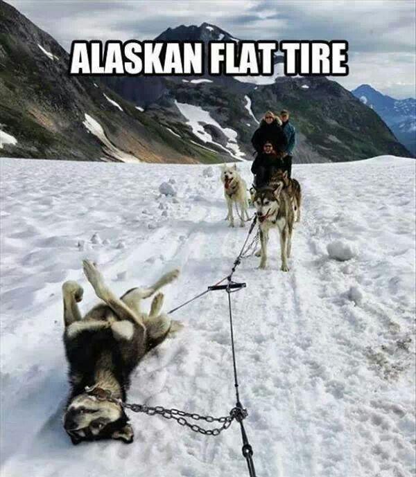 Husky - Alaskan Flat Tire