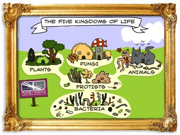 Cycle 1 Week 2 Science The Five Kingdoms There Is A