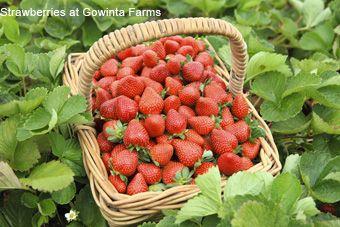 Gowinta Farms Strawberries - Yum!!! #airnzsunshine