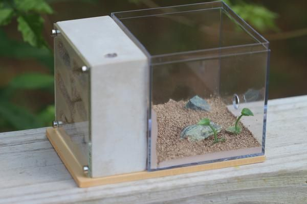 The Fortress Formicarium is a great gift for someone who believes one person's pest is another person's beloved pet.