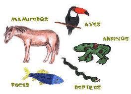 Reino Animal: Vertebrados e Invertebrados