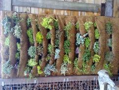 Simpel op je oude schutting te maken.  Een verticale tuin, voor kleine en grote tuinen.  Ik heb deze gevuld met kruiden.  Het ruikt heerlijk en groeit enorm hard,  Kan in volle zon of in schaduw.