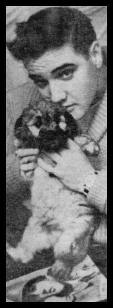 """This picture was taken in the lounge of the Hotel Grunewald in Bad Nauheim, Germany. Elvis bought the 7.5 week old (born September 9, 1958) male poodle puppy, named """"Cherry von der Mainkur"""", from breeder Adolf Ochs in Fechenheim (north east of Frankfurt) for 450 DM (Deutsche Mark) on October 30, 1958 just before going on maneuver at Grafenwöhr. He gave the poodle to hotelier Otto Schmidt when he left the hotel in February 1959. Schmidt later gave Cherry to his cook, Frau Reinhardt."""