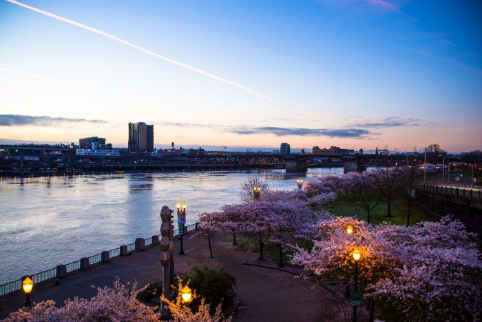 In the springtime, the Tom McCall Waterfront Park in Portland is absolutely magical.