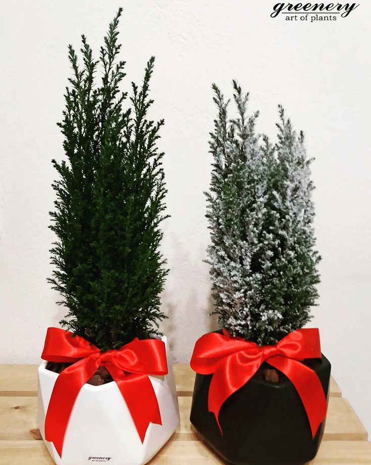 Believe in the magic of Christmas! #greenery #christmas #xmas #gifts