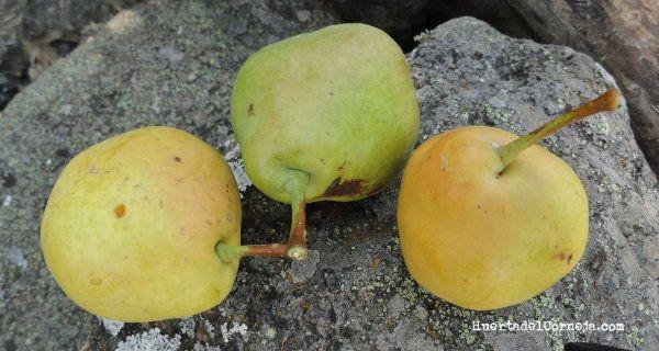 tres peras de longuindo o donguindo.
