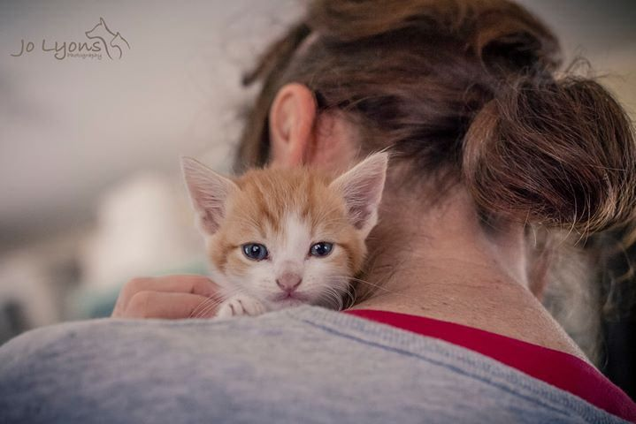 This one's for Robyn who helped me at Renbury Farm Animal Shelter on Friday... she fell for this little junior who is safe with rescue <3 | by Jo Lyons Photography