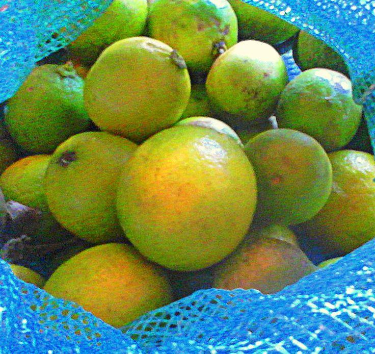 Limón peruano. ESENCIAL.