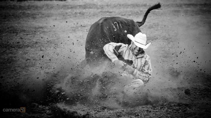 17 Best Images About Steer Wrestling On Pinterest