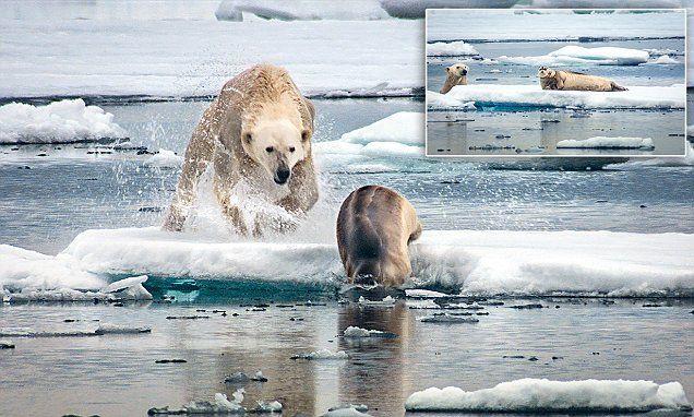 Gripping new David Attenborough series captures life-or-death battles