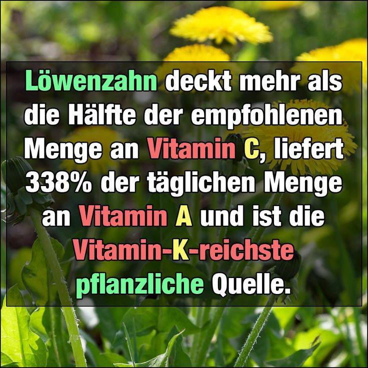 [...] Frische Löwenzahnblätter sind sehr kalorienarm und umfassen in 100 Gramm nur 45 Kalorien. Löwenzahnblätter liefern eine Menge verdauungsfördernder Ballaststoffe, eine Vielzahl an Vitamine, Mineralstoffe und krankheitsschützenden Antioxidantien. 100 Gramm Löwenzahn decken bereits mehr als die Hälfte der täglich empfohlenen Menge an Vitamin C, liefern 338% der täglichen Menge an Vitamin A und sind die Vitamin-K-reichste pflanzliche Quelle. Sie bieten 650% der täglich zu verzehrenden…