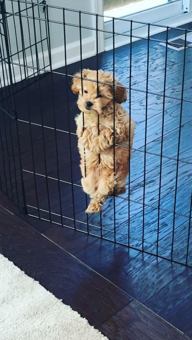 Liste der süßesten Hunderassen in der Welt mit Bild. Machst du sie Haustiere? – Arina – #Arina #Bild #Der #du #Haustiere