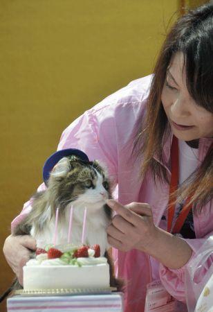 <会津鉄道>猫駅長「らぶ」3歳の誕生日祝う