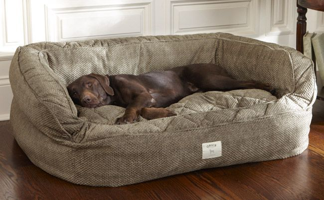 Having a large breed dog presents certain challenges like figuring out what is the best dog bed for large dogs. #largedogbeds