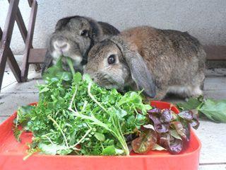 Alimentation naturelle -Marguerite & Cie