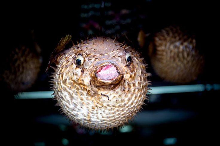 Suddenly Blowfish