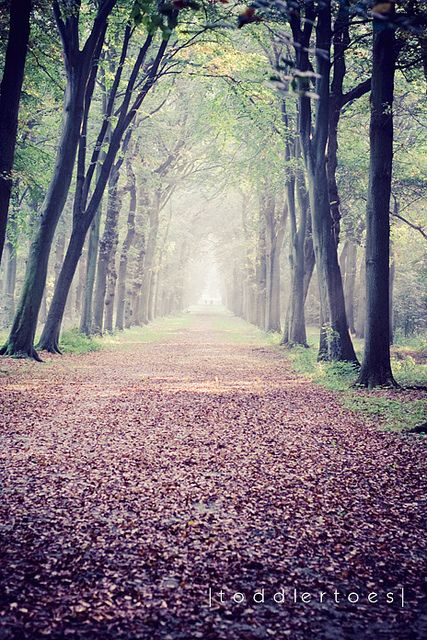 Two roads diverged in a wood, and I-- I took the one less traveled by,  And that has made all the difference.