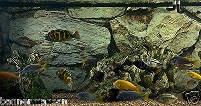 20 Gallon Long Aquarium