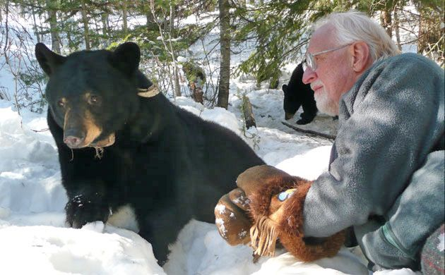 Dr. Lynn Rogers of the North American Bear Center, Ely, Minnesota with 8-year old June the Black Bear.