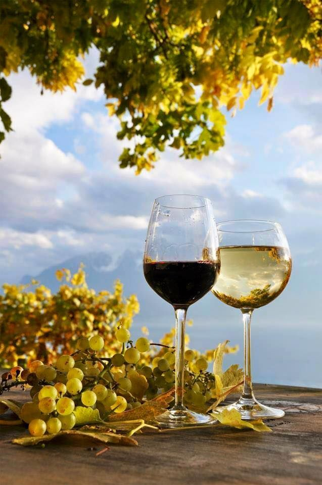 Wine... Red or White?!