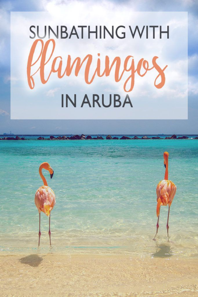Where to see flamingos in Aruba? How to get there? Find your answer here!