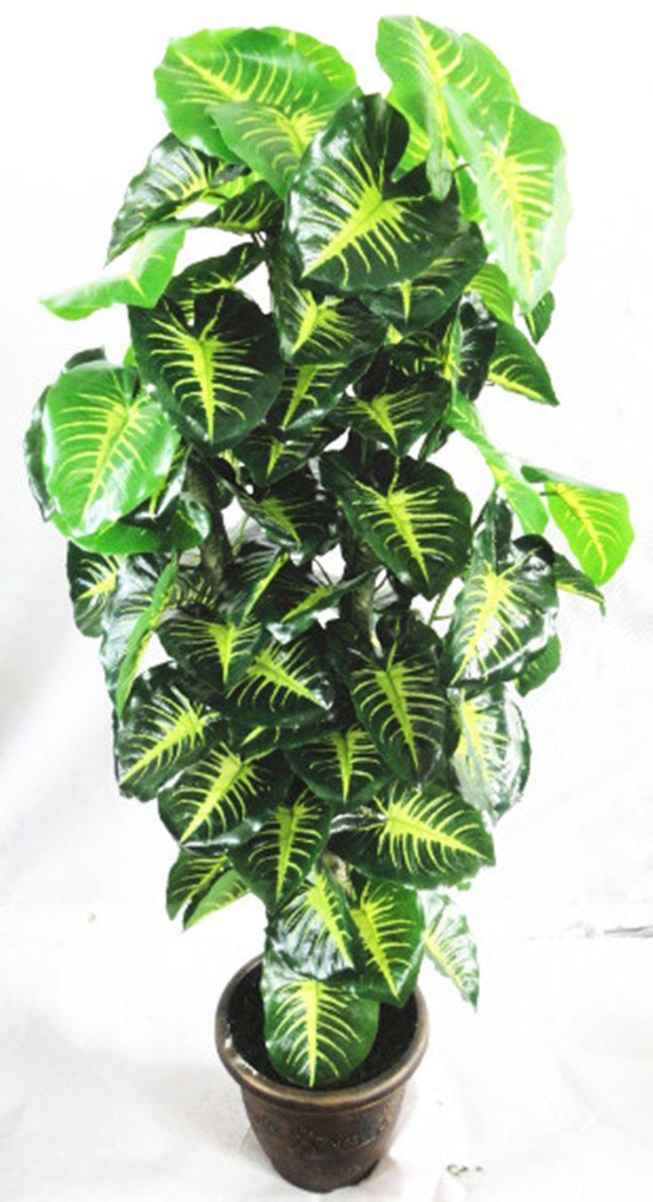 Saksı Bitkileri ~ 056